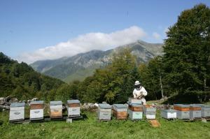 Bee-beekeeping17
